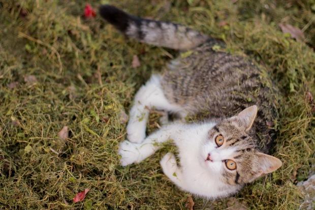 芝生にいる猫