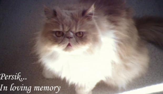 Alex Treinerさんの猫