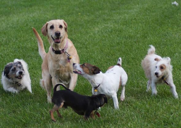 色々な種類の犬たち