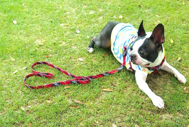 草の上に伏せる犬