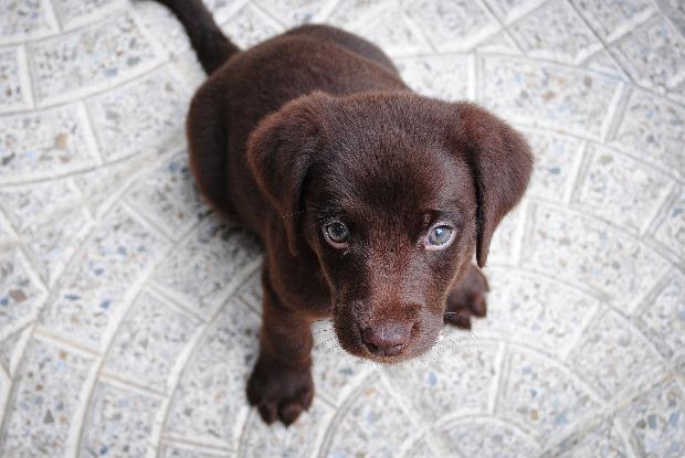 上目遣いで見つめる犬