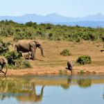 elephant-weight0