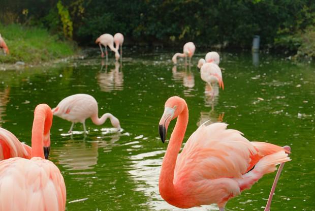 東武動物公園のフラミンゴ