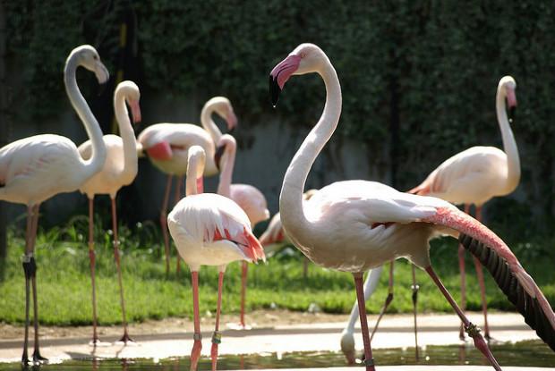 多摩動物公園のフラミンゴ