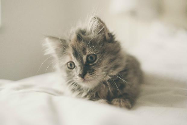 特にワクチンの接種が必要な子猫