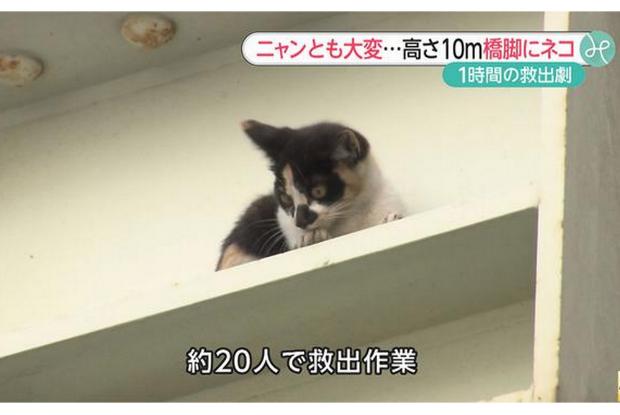 高架橋で救出された猫