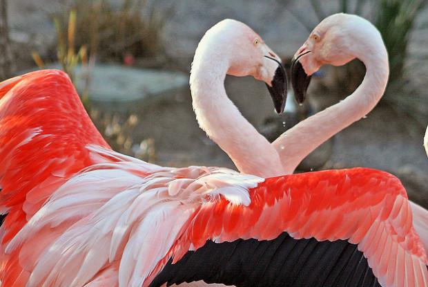 高知県の動物園