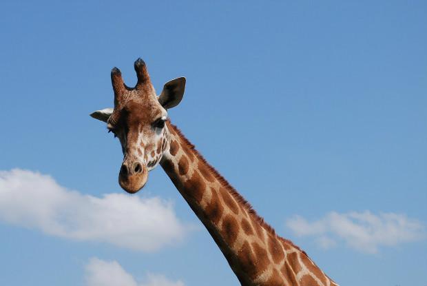 徳島県の動物園とくしま動物園