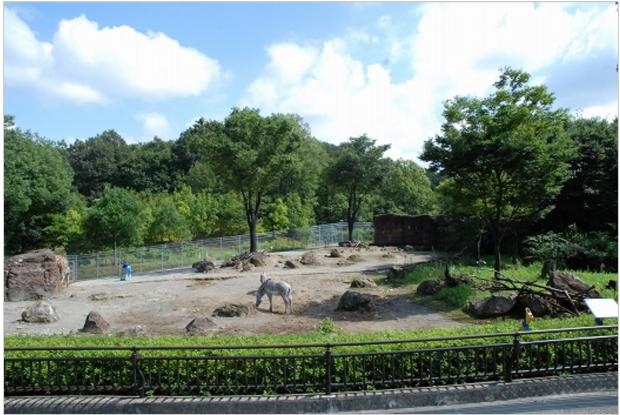 石川県の動物園のいしかわ動物園のアフリカの草原