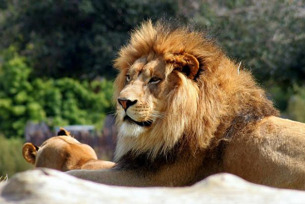 高知県の動物園のわんぱーくこうちアニマルランド