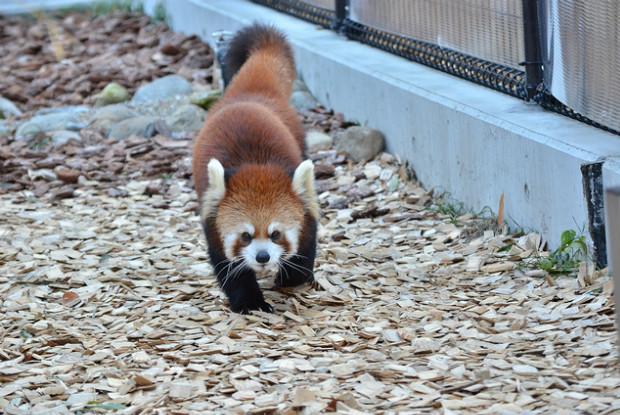 静岡県の動物園の日本平動物園