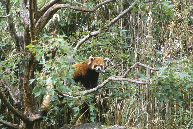 高知県の動物園ののいち動物公園