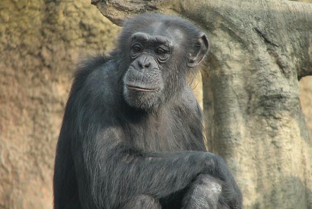 石川県の動物園のいしかわ動物園