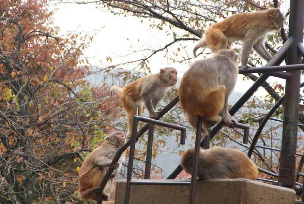富山県の動物園にいるサル