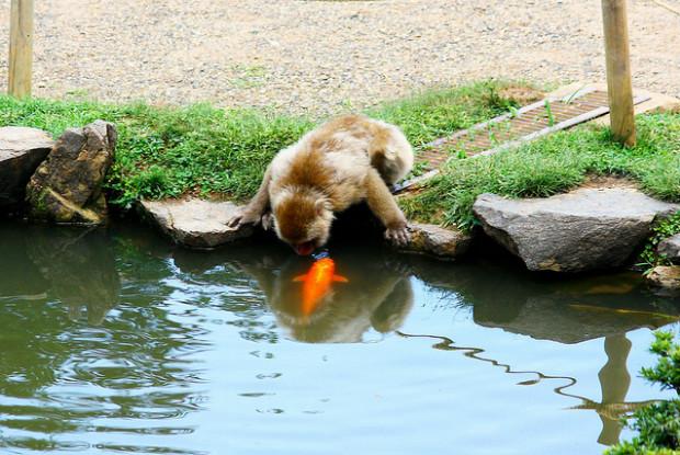 京都の動物園の猿