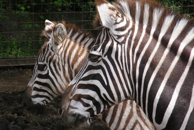 静岡県の動物園の伊豆アニマルキングダム