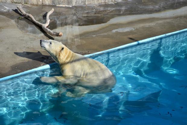 静岡県の動物園の浜松市動物園