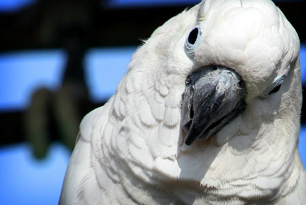 広島県の動物園のオウム