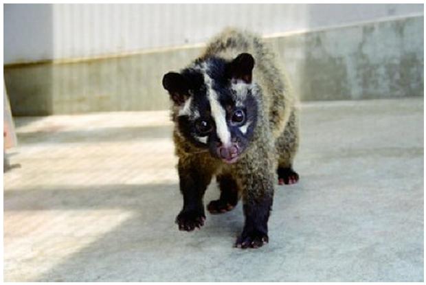 新潟県の悠久山公園にいる動物