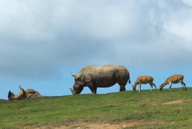 大分県の動物園の九州自然動物公園アフリカンサファリのサイとシカ
