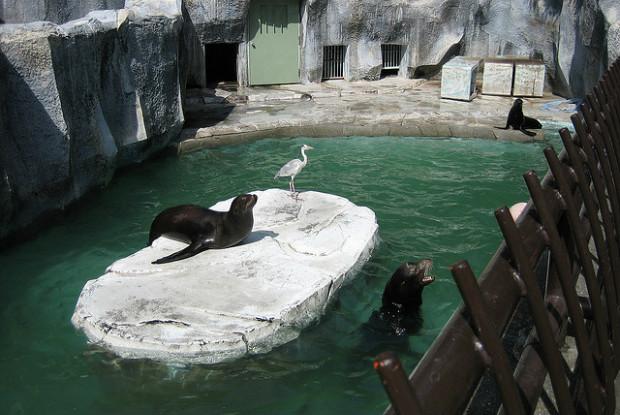 愛媛県の動物園、とべ動物園