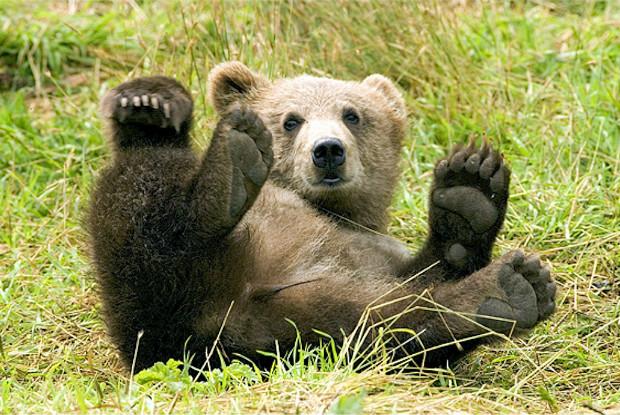 芝生に寝転ぶ熊