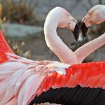 flamingoheart
