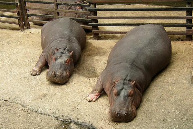 長崎県の動物園の長崎バイオパーク