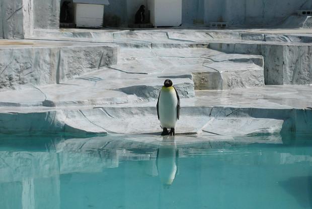 愛媛県の動物園のとべ動物園