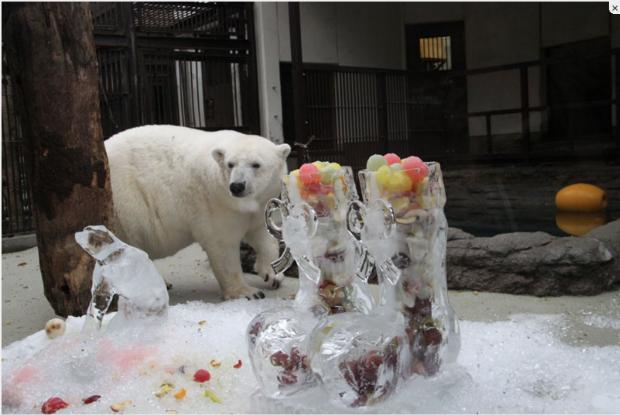 愛媛県の動物園、とべ動物園のしろくまピース