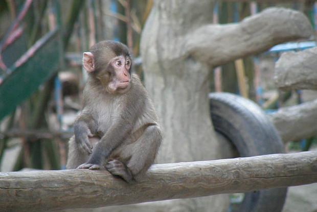 大分県の動物園の高崎山自然動物園のニホンザル