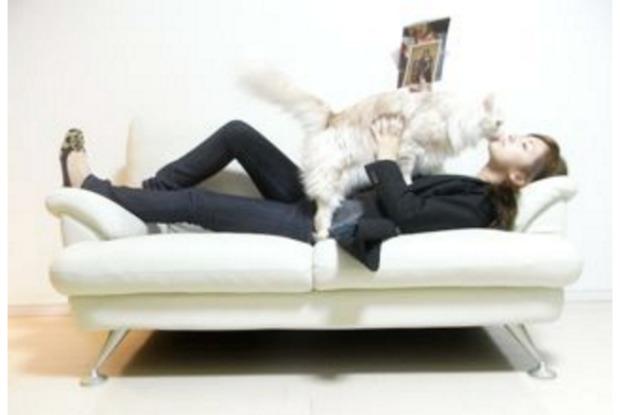 北川景子さんとペットの猫のジル