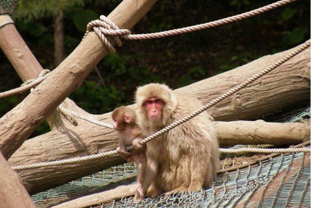 むつ市脇野沢野猿公苑