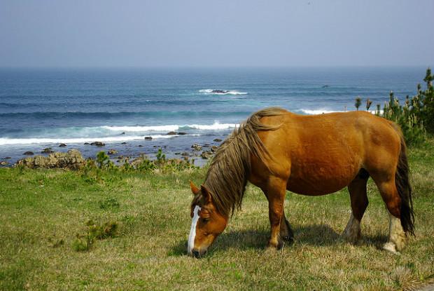 青森県にいる馬