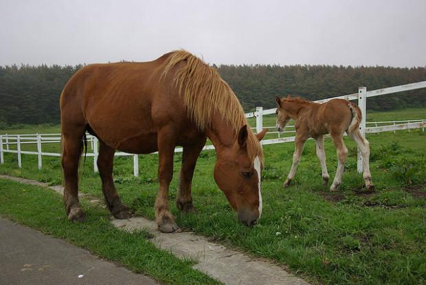 青森県の馬