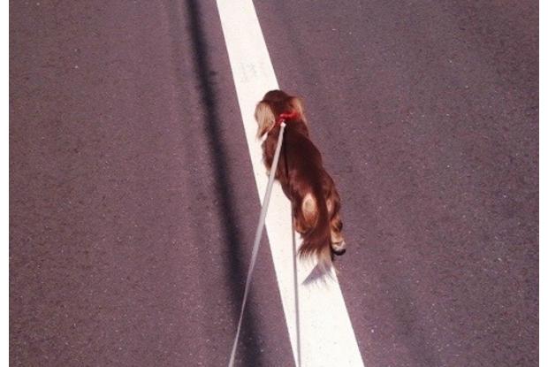 ローラさんのペットの犬のダックスフンド、モカ