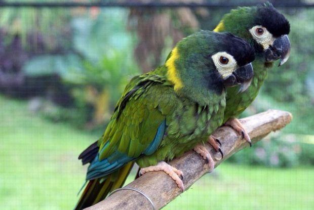 パナエワ・レインフォレスト・ズーの鳥