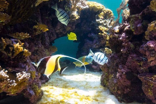 ハワイのワイキキ水族館の魚