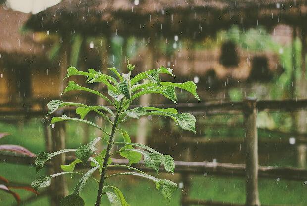 雨の日の植物