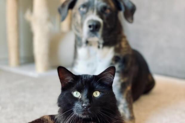 見つめる犬と猫