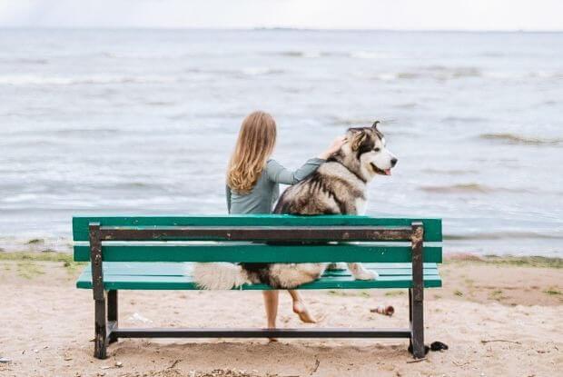 海沿いのベンチに座る犬と人