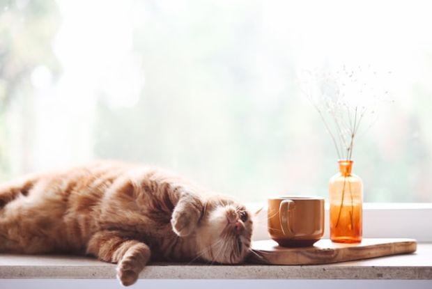 窓際で寝そべる猫
